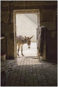 Christ_rode_a_donkey